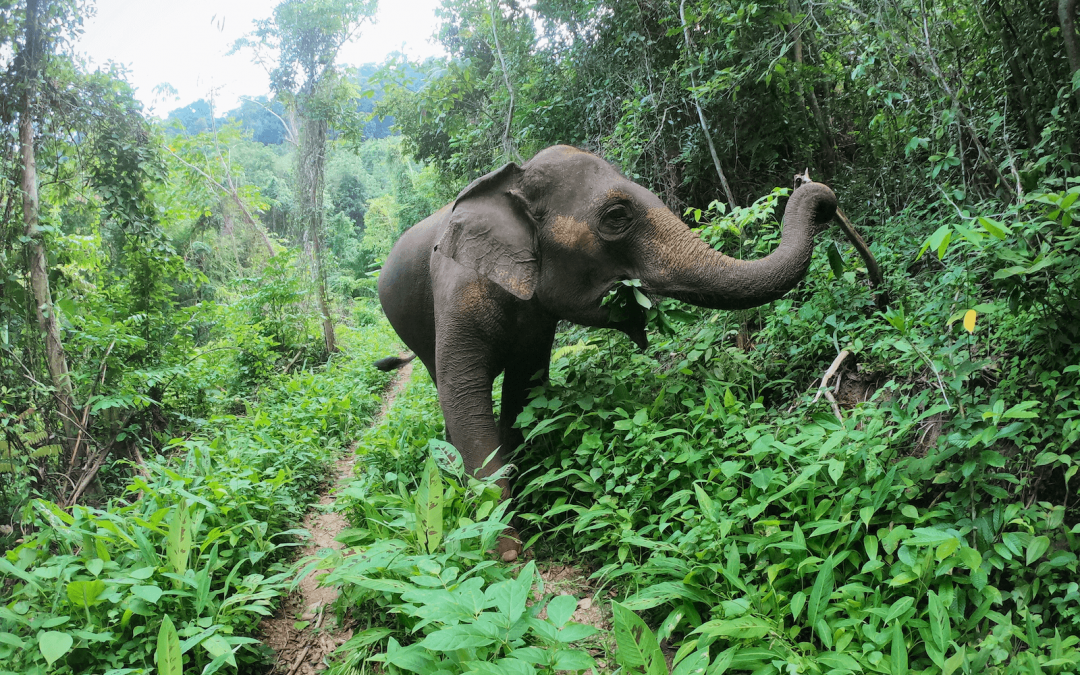 An Ethical Yet Interactive Approach to Elephant Welfare