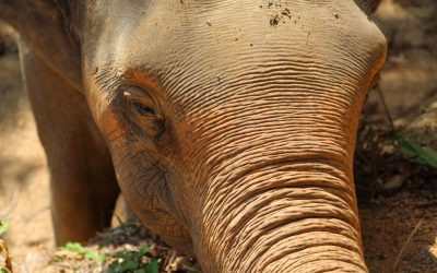 Support Our Elephants – Phuket Nature Reserve Elephant Habitat