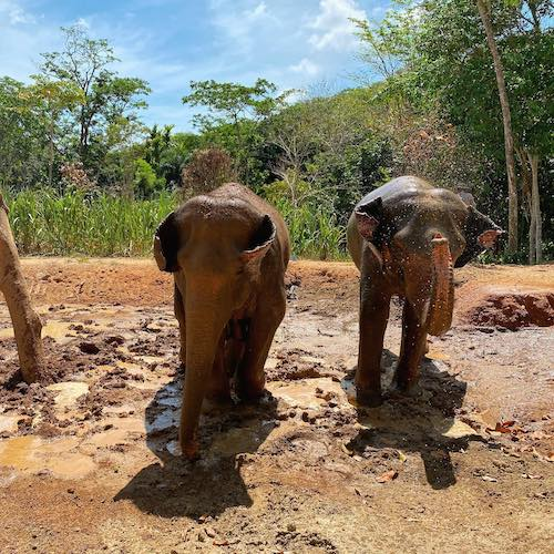 Phuket Nature Reserve Eco Elephant Sanctuary